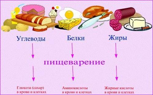 продукты ускоряющие обмен веществ для похудения